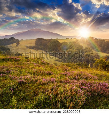 wild savory and mint  in  fog on hillside meadow in high mountains at sunset light with rainbow - stock photo