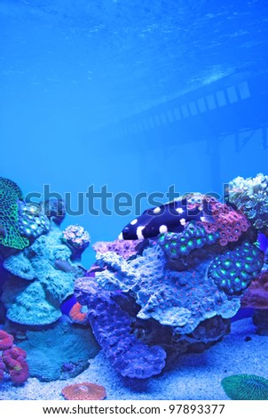 wild species of red sea fish and coral - stock photo