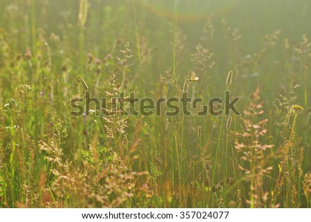 wild summer meadow with flowers and grasses, golden sunlight, with dragonfly - stock photo
