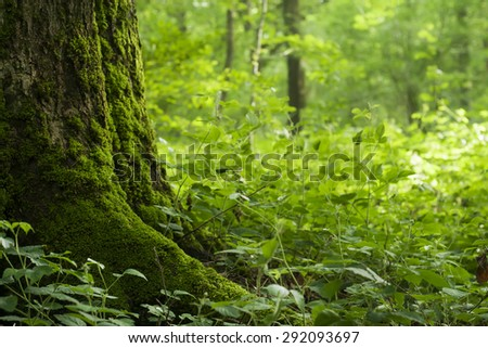 wild vegetation in a forest, nature background  - stock photo