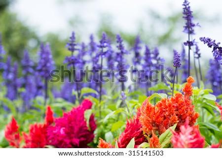 Wild vivid flowers in the garden - stock photo