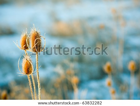Wild Winter Weed - stock photo
