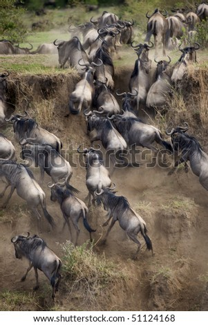 Wildebeest, Serengeti National Park, Serengeti, Tanzania, Africa - stock photo