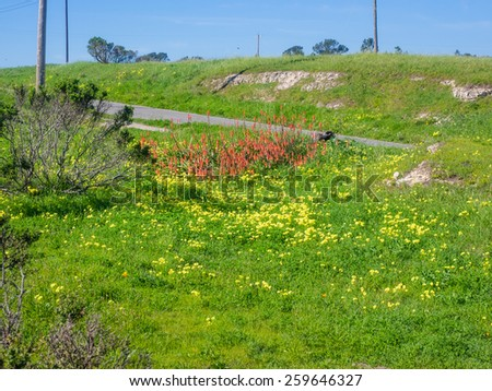 Wilder Ranch State Park is a California State Park on the Pacific Ocean coast north of Santa Cruz, California.  - stock photo