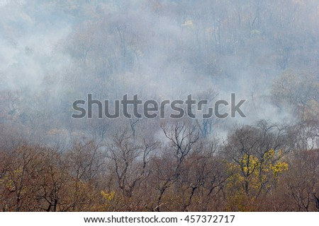 wildfire burning dry forest and dry tree with smoke - stock photo