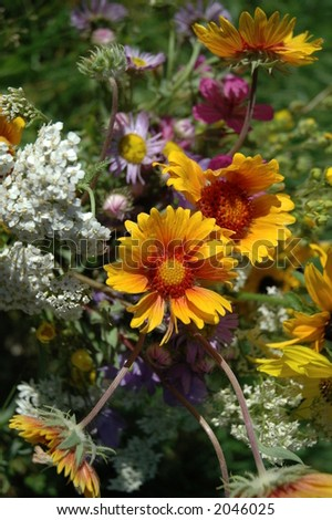 wildflower bouquet - stock photo