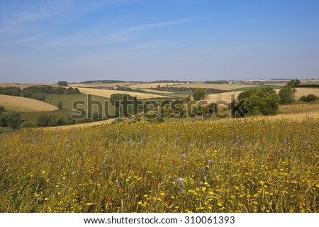 wildflower meadow overlooking agricultural scenery in the yorkshire wolds england under a blue sky in summer - stock photo