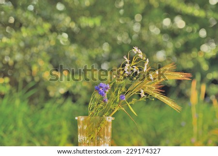 Wildflowers and dawn in a field - stock photo