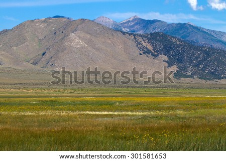 Wildflowers and mountains at Ruby Lake National Wildlife Refuge in Nevada - stock photo