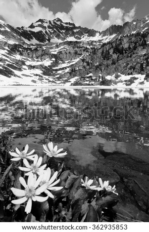 Wildflowers and Snowy Mountain Reflected in Pitkin Lake. Veil Pass, Rocky Mountains, Colorado - stock photo