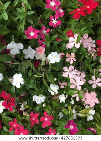 Wildflowers are blooming in the spring - stock photo