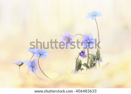 Wildflowers background - stock photo