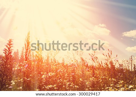 Wildflowers Field and Blue Sky with Rays in Summer Day - stock photo