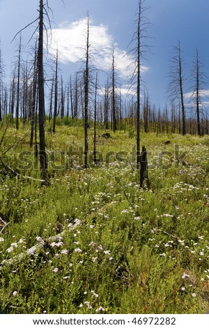 Wildflowers growing in Hayman forest fire area, Colorado - stock photo