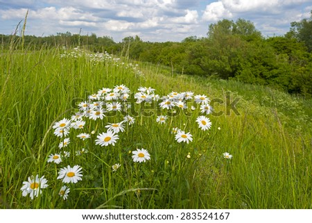 Wildflowers in a sunny field in spring - stock photo