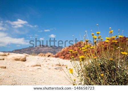 Wildflowers in Red Rock Canyon, Las Vegas, Nevada, USA - stock photo