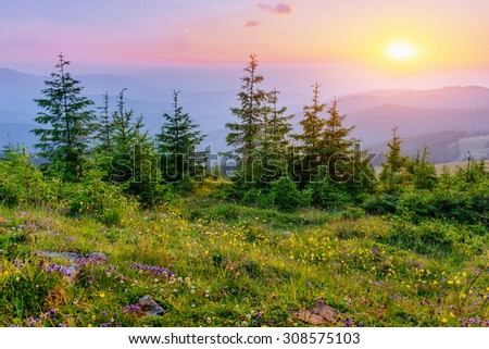 wildflowers in the mountains at sunset - stock photo