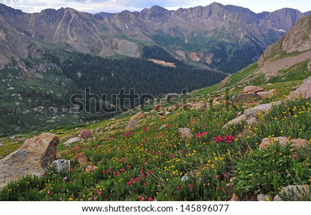 Wildflowers in the San Juan Mountains, Colorado Rockies, USA - stock photo