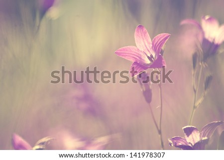 wildflowers lilac bells - stock photo