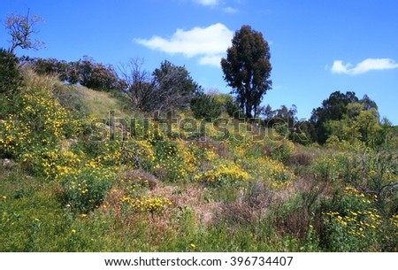 Wildflowers on a hill side in San Diego, CA - stock photo