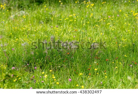Wildflowers on a meadow - stock photo