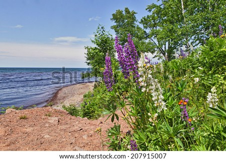 Wildflowers on Lake Superior beach - stock photo