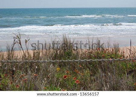 Wildflowers on the dune overlooking a secluded Flagler Beach, Florida - stock photo
