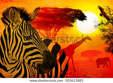 Wildlife and beautiful sunset in the Serengeti Park. Tanzania. Africa. Africa wildlife and nature concept. Heat, drought and  global warming. Image done on textured old paper background - stock photo