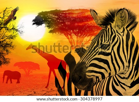 Wildlife and beautiful sunset in the Serengeti Park. Tanzania. Africa. Africa wildlife and nature concept. Heat, drought and  global warming. - stock photo