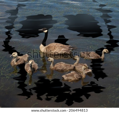 Wildlife danger and animal conservation concept as a family of canada geese on a lake polluted from a toxic oil spill shaped as a death skull symbol as a metaphor for environmental damage to habitat. - stock photo