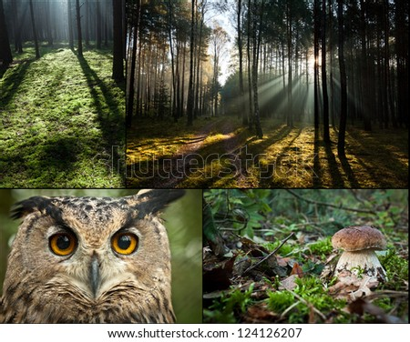 Wildlife in the forest at sunrise - stock photo