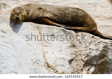 Wildlife sanctuary in Punta de Choros and Isla Damas, La Serena, Chile - stock photo