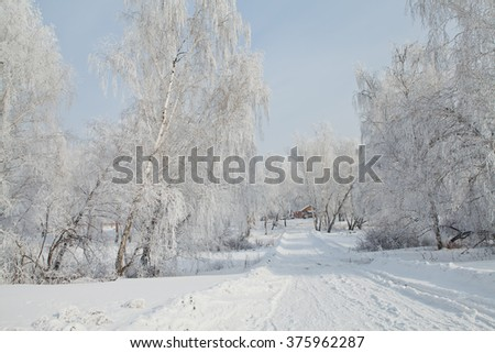 Wildlife Siberia Sunset over the steppe . Snowy Forest . birch . Winter. - stock photo
