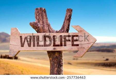 Wildlife wooden sign with a desert background - stock photo