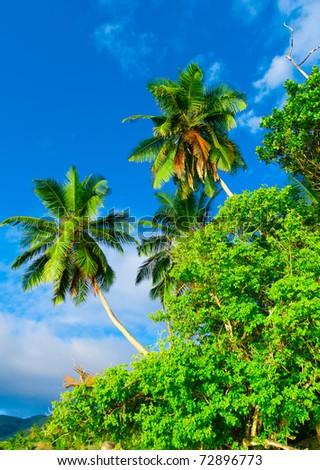 Wilds Paradise Jungle - stock photo