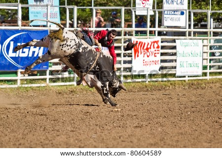 WILLITS, CA - JULY 4: Another rodeo bareback bull rider makes unsuccessful ride at the Willits Frontier Days, California's oldest continuous rodeo, held July 4, 2011 in Willits, CA. - stock photo