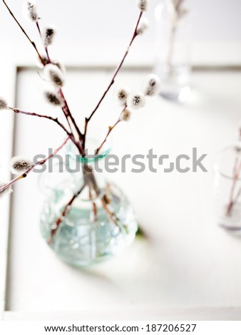 Willow branches in a glass bottle on a white wooden background - stock photo