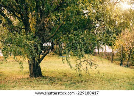 Willow in the park - stock photo