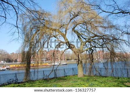 Willow trees along the river Thames - stock photo