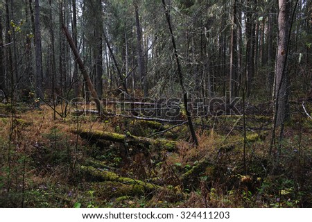 wind-fallen trees deep in taiga - stock photo