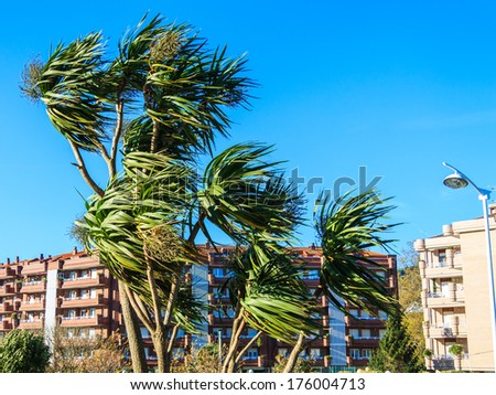 Wind over palm trees - stock photo