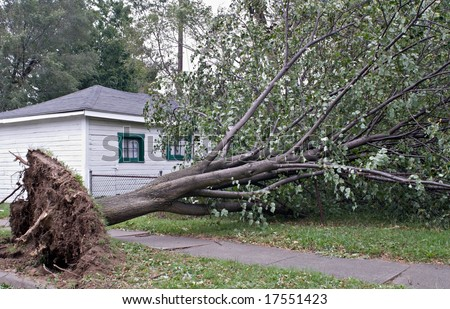 Wind Storm Damage - stock photo