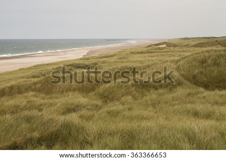 Wind Through the Dune Grass.The dune grasses on the west coast of Denmark are prolific. Swathes of the west coast are covered in the grasses and its subtle colours ripple as the wind moves through it. - stock photo