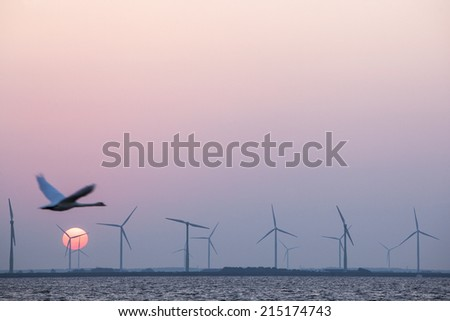 wind turbines and swan in colorful sky with red sun in the dutch province of flevoland - stock photo
