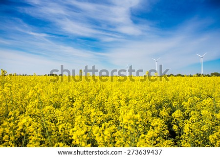 Wind Turbines in a Rape Field - stock photo