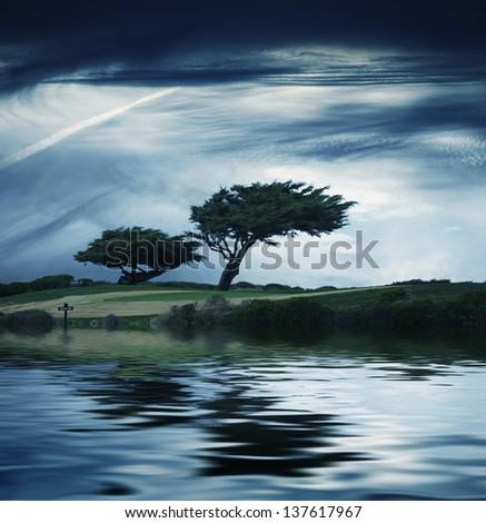 Windblown pine trees under moody sky - stock photo