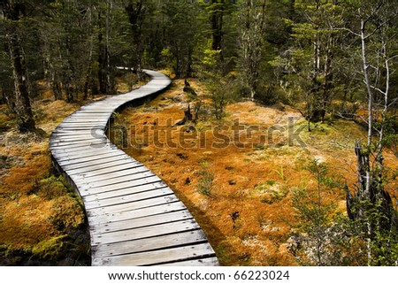 Winding forest wooden path walkway through wetlands, milford  track, new zealand - stock photo