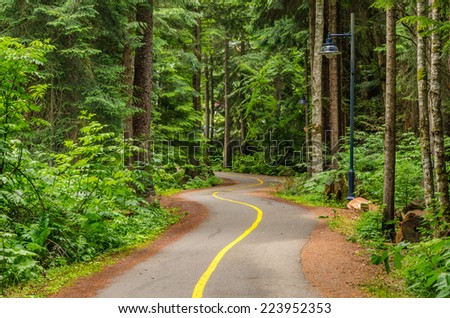 Winding Paved Pathway Through a Wood - stock photo