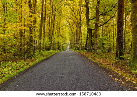 winding road in autumn forest - stock photo