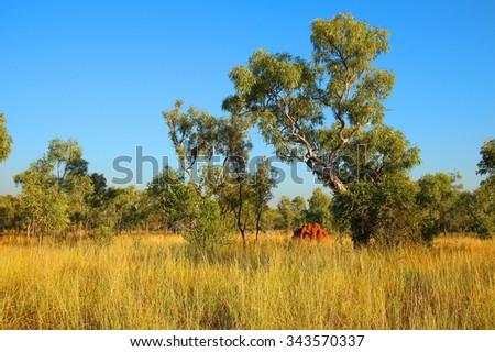 Windjana Gorge, Kimberley, Western Australia - stock photo